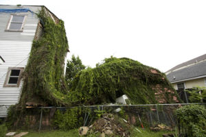 house overrun by foliage